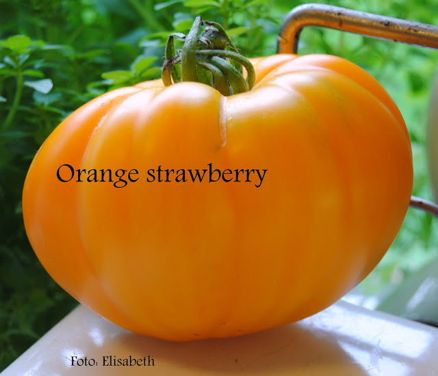Orange Strawberry