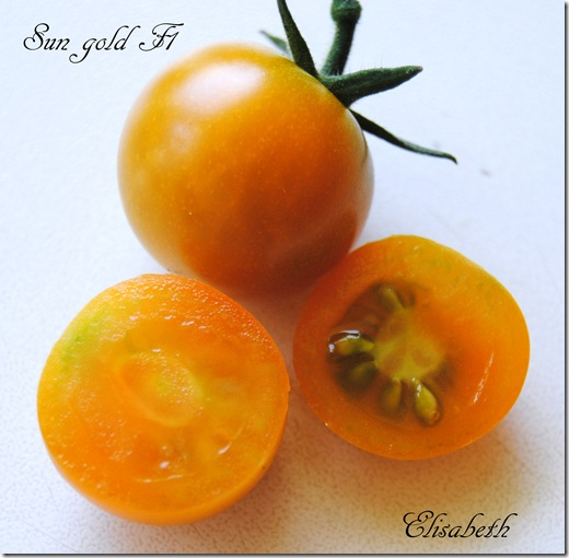 SunGold F1