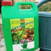 Gødning af tomatplanter