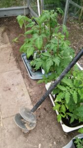 Pælebor - et overset redskab til udplantning af tomater i drivhuset