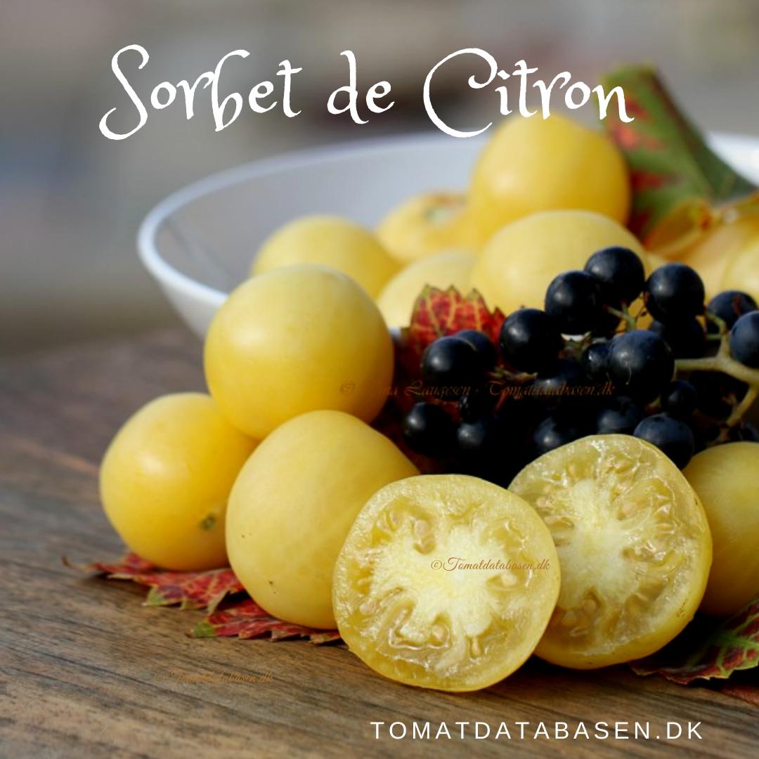 Sorbet de Citron