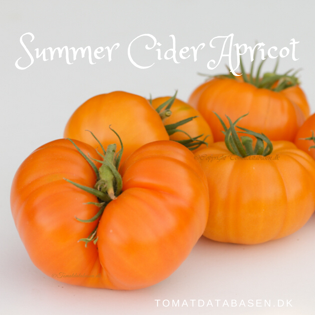 Summer Cider Apricot