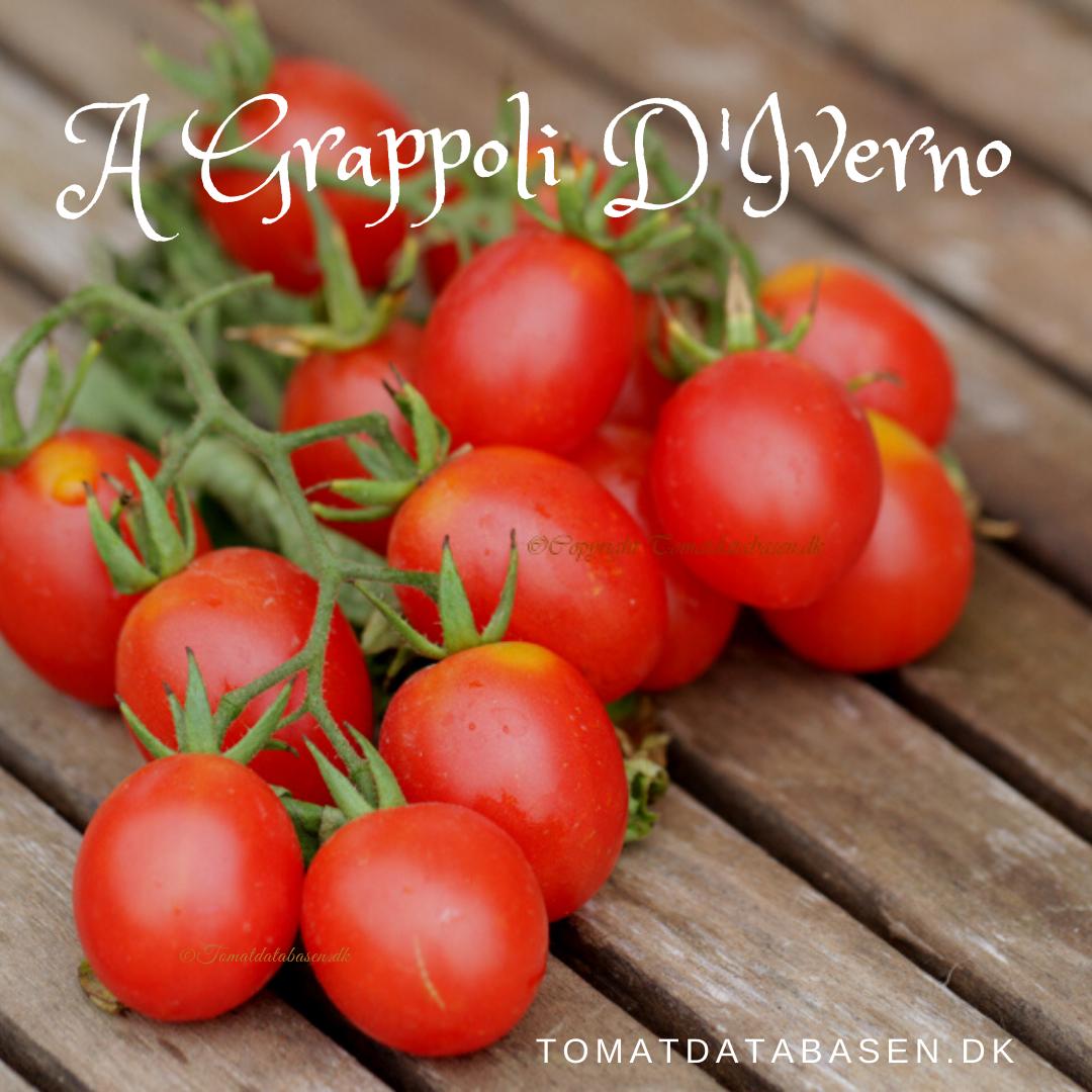 A Grappoli D'Iverno