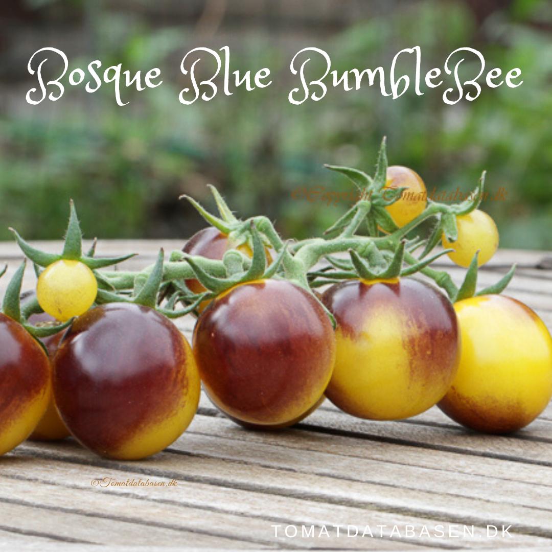 Bosque Blue Bumblebee
