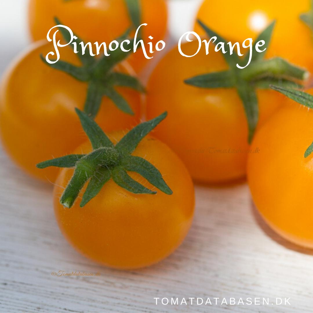 Pinocchio Orange