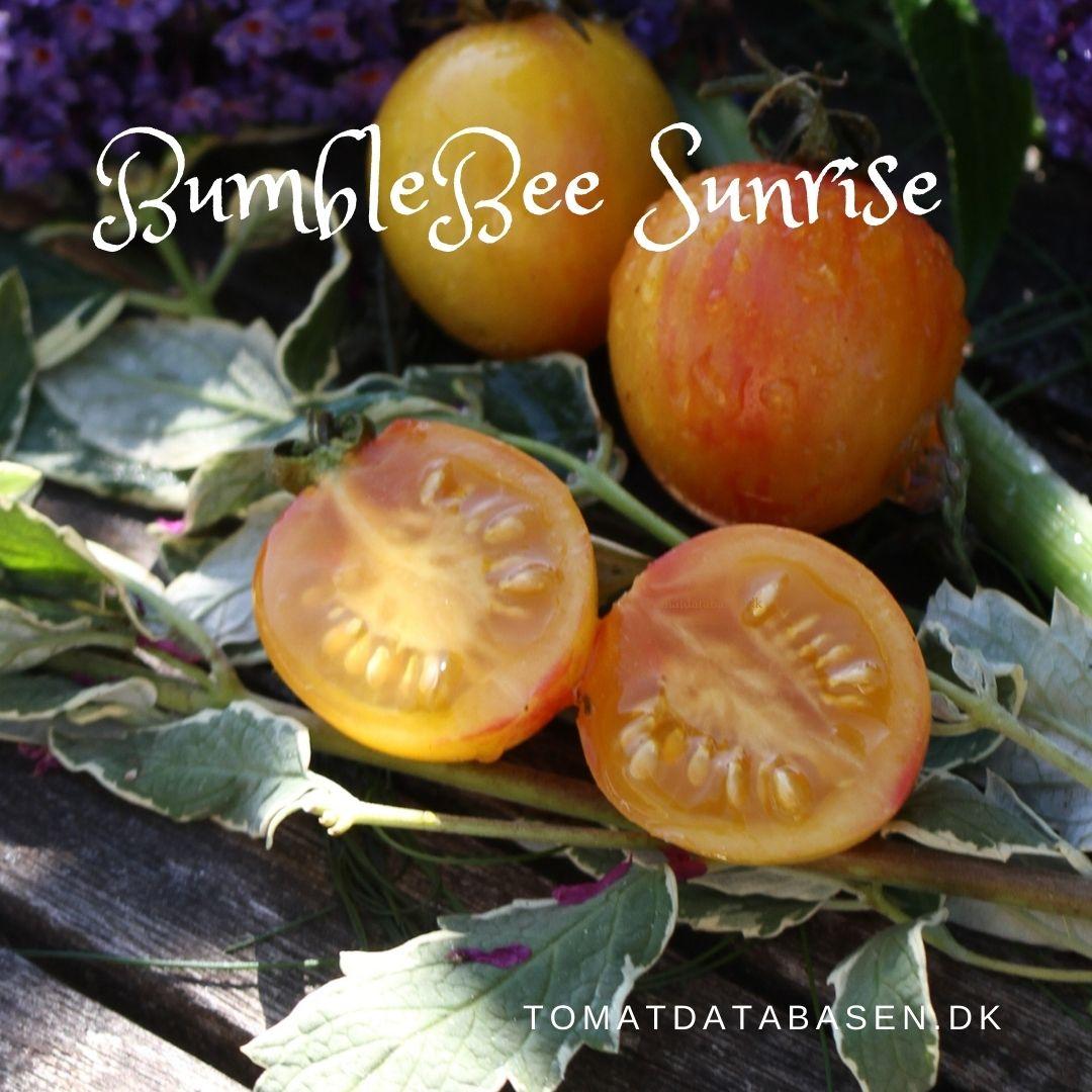 Sunrise Bumblebee